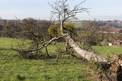ландшафт сельской местности осени с deadfallen деревья и голубое небо Стоковые Изображения