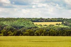 Ландшафт сельской местности с зелеными цветами зрея пшеничного поля Стоковое фото RF