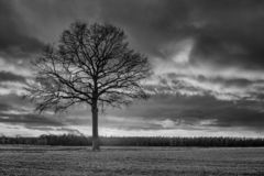 Ландшафт сельской местности с красивым деревом и красочным заходом солнца, Weelde, Фландрией, Бельгией стоковое изображение