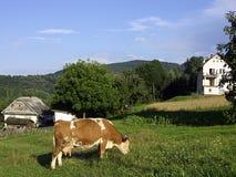 ландшафт сельской местности Стоковое Изображение