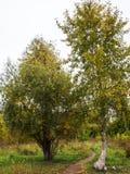 Ландшафт следа парка осени Стоковое Изображение