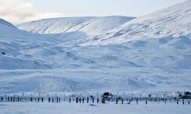 ландшафт снежный стоковое фото