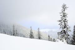ландшафт снежный Стоковая Фотография RF