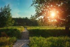 Ландшафт Солнце светит через листья дерева Стоковое Изображение