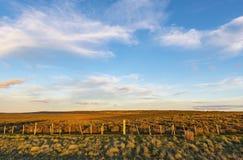 Ландшафт степи в Патагонии, Чили стоковые фотографии rf