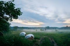 Ландшафт страны в тумане Стоковое Фото