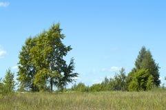 Ландшафт страны лета Стоковые Фотографии RF
