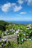 Ландшафт с гортензиями - островами Азорских островов стоковые изображения
