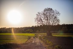 Ландшафт с деревом стоковая фотография