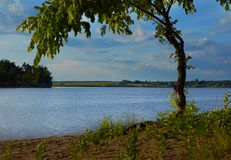 Ландшафт с деревом на озере на летний день Стоковое Изображение RF