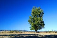 Ландшафт с деревом Стоковое Изображение RF