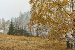 Ландшафт с желтыми деревьями, гора осени Vitosha, Болгария стоковые фотографии rf