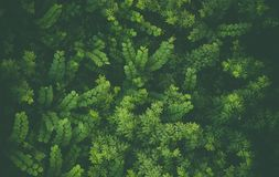 Ландшафт с зелеными листьями Стоковое Фото