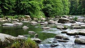 Ландшафт с лесом, рекой и камнями видеоматериал