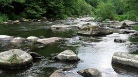 Ландшафт с лесом, рекой и камнями акции видеоматериалы