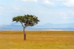 Ландшафт с никто дерево в Африке стоковые фото