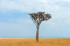 Ландшафт с никто дерево в Африке стоковое изображение
