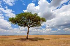 Ландшафт с никто дерево в Африке стоковая фотография rf