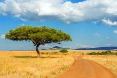 Ландшафт с никто дерево в Африке стоковое фото rf
