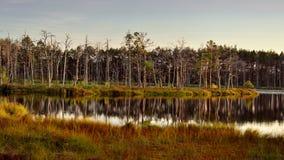 Ландшафт с озером леса в Латвии Стоковое Изображение