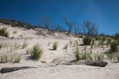 Ландшафт с пляжем, дюнами, травой пляжа, driftwood, и безоблачным голубым небом Стоковые Изображения