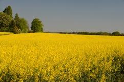 Ландшафт с полем семени масличной культуры Стоковые Изображения