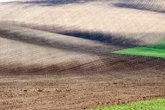 Ландшафт с полями другого цвета волнистыми текстурированными сельскими Стоковая Фотография RF