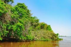 Ландшафт с рекой и зеленая вегетация деревьев и завода стоковая фотография rf