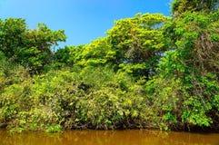Ландшафт с рекой и зеленая вегетация деревьев и завода стоковое фото rf