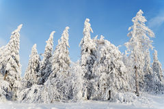 Ландшафт с снежк-покрытыми деревьями Стоковое Изображение RF