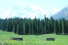 Ландшафт с сосной и горой Стоковые Фото