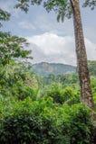 Ландшафт с сочным зеленым дождевым лесом с высокорослым старым деревом и зеленым холмом в предпосылке, ранчо сверла горы Afi, Ниг Стоковые Фотографии RF