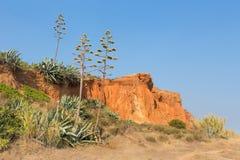 Ландшафт с столетником на португальской скалистой горе Стоковое Изображение RF
