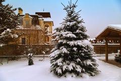 Ландшафт с snowbanks белых снега и сосен в саде страны стоковая фотография