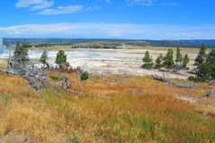 Ландшафт таза гейзера парка Йеллоустон геотермический стоковые фотографии rf