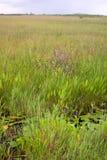 ландшафт травы болотистых низменностей Стоковая Фотография RF