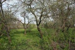 Ландшафт травы, поленики, яблока и зеленой окружающей среды в саде как естественная предпосылка стоковая фотография