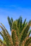 ландшафт тропический Стоковая Фотография RF