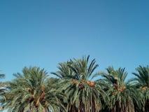 ландшафт тропический Стоковые Фото