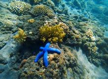 Ландшафт тропического seashore подводный Коралловый риф и голубые морские звёзды Стоковые Изображения