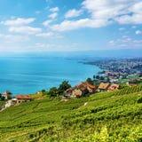 Ландшафт тропы террасы виноградника Lavaux в Швейцарии Стоковые Изображения