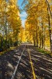 ландшафт упаденный осенью выходит желтый цвет дороги парка Деревья осени в парке стоковые фотографии rf