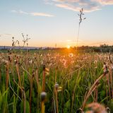 Ландшафт Урала Ландшафт России Редкие красивые цветки Стоковая Фотография