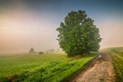 Ландшафт утра мглистый в Adrspach - Teplice трясет Стоковые Фото