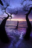 Ландшафт утра Стоковые Фото