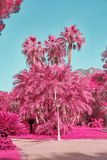 Ландшафт фантазии тропический Стоковое фото RF