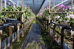 Ландшафт фермы питомника орхидеи Стоковое Фото