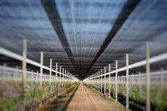Ландшафт фермы питомника орхидеи Стоковая Фотография RF