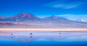 Ландшафт фламингоа Стоковая Фотография RF