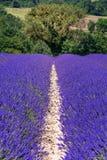 Ландшафт француза - Drome Стоковое Изображение RF